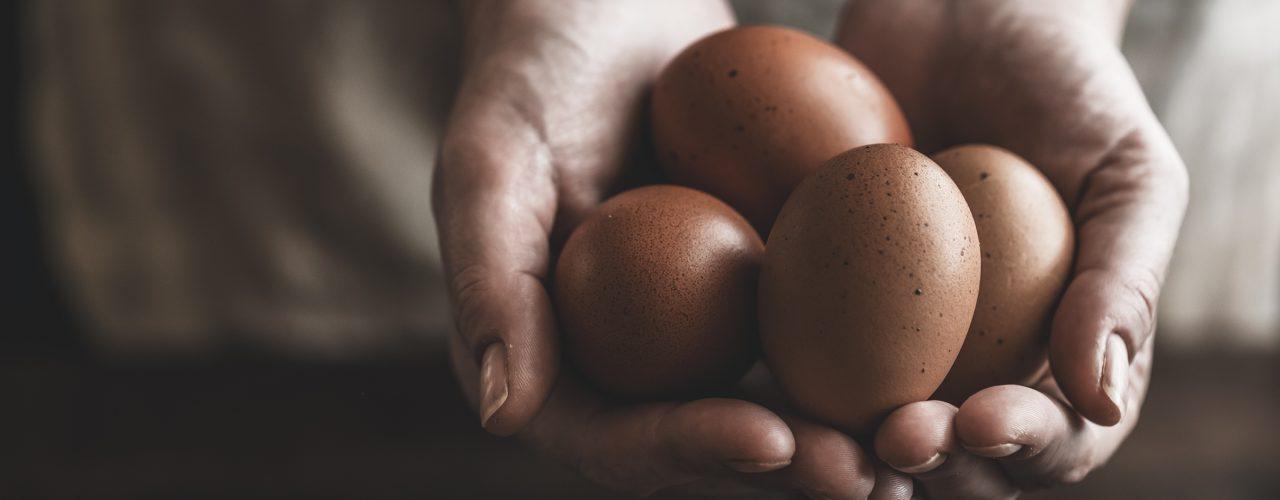 Mangiare uova migliora lo sviluppo celebrale dei bambini